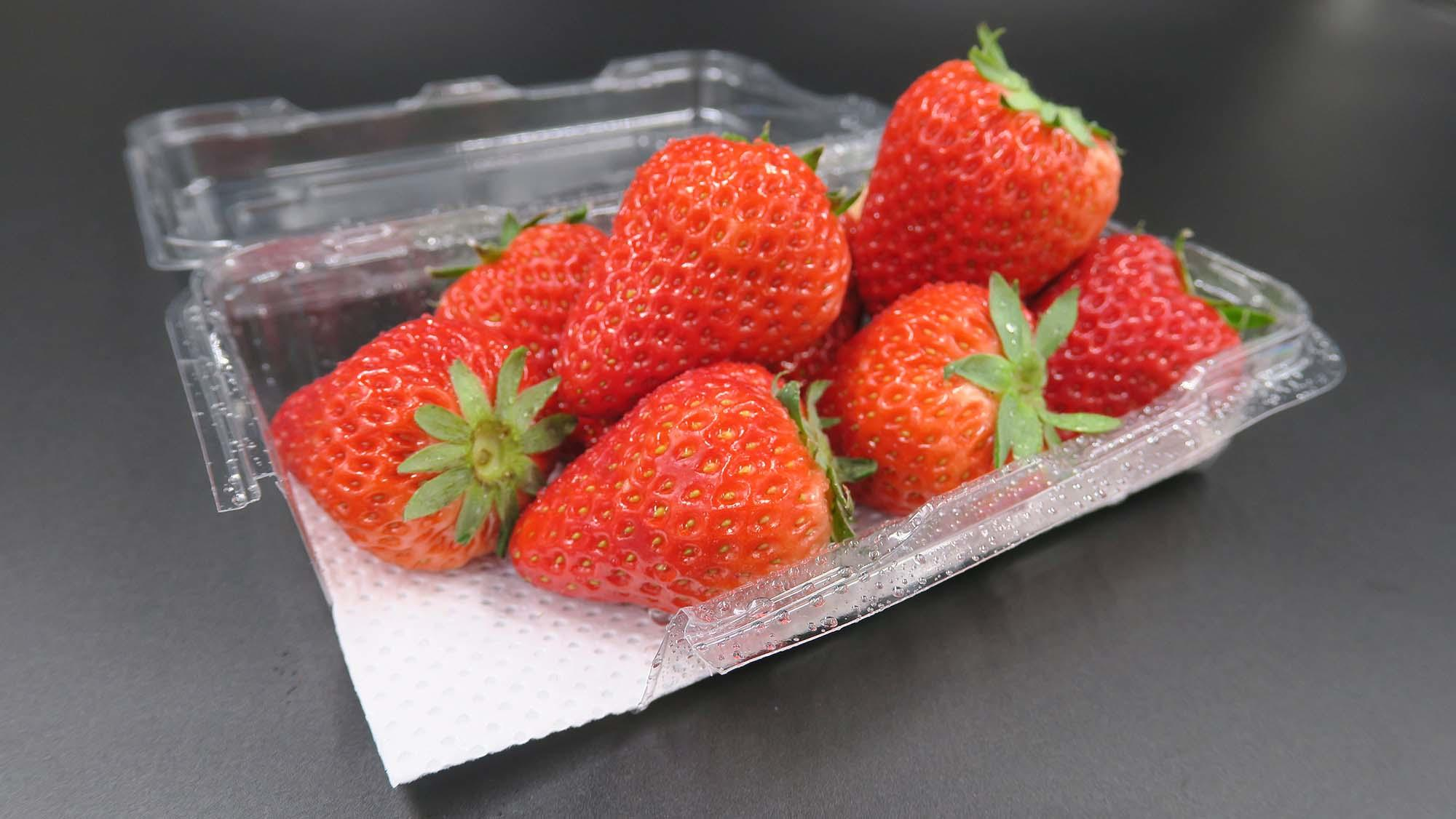 Demi pad asbsorbent pad for under fruits and vegetables to ensure the best possible food for blueberry-1